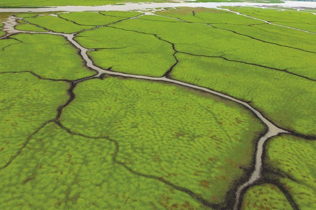 An aerial image of floodplain channels, taken from an ultralight aircraft in July, reveals web-like patterns. © Piotr Naskrecki and Jen Guyton
