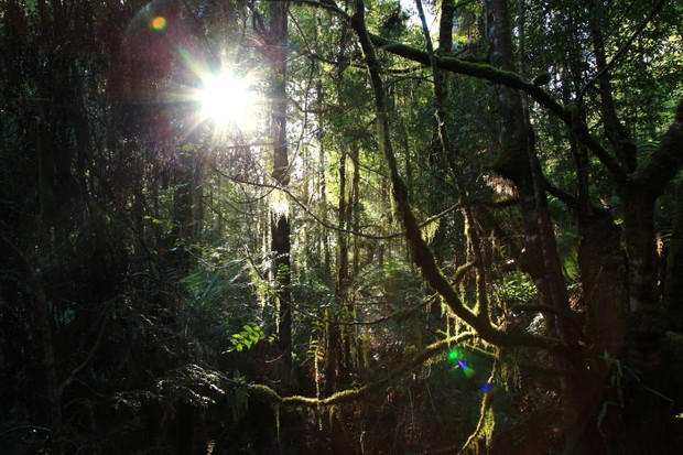 Most of Tasmania's Southwest National Park is covered with temperate rainforest. © Terra Mater/Matt Hamilton