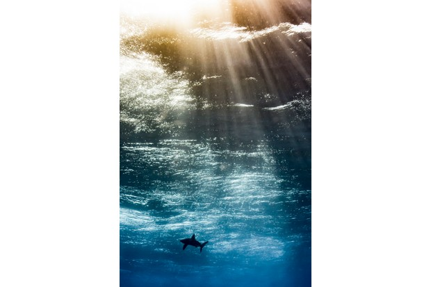 Up & Coming Underwater Photographer of the Year 2017. Oceanic in the sky. © Horatio Martinez/UPY 2017
