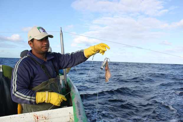 Trial's in Brazil suggest Hookpod reduces the number of seabirds, such as albatrosses, that end up as by-catch.