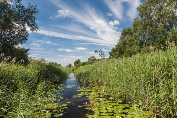 Summer at Wicken Fen Nature Reserve, Cambridgeshire, East of England