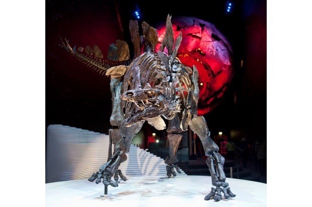 Sophie the Stegosaurus at the NHM. © Trustees of the Natural History Museum