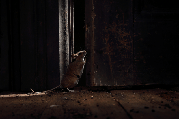 MPOY Winner: Woodmouse shut that door. © Roy Rimmer/The Mammal Society