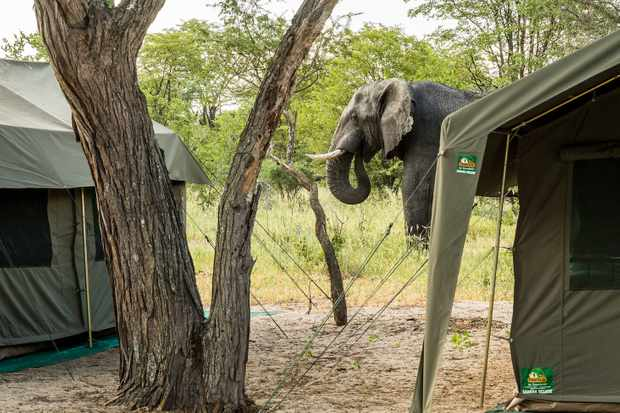 African Conservation Experience – A real wilderness adventure in the Okavango Delta – Advertisement