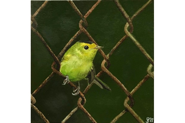 One of the finalists in the competition. Bird on fence - 'Wilson's Warbler' by Paula Schramm