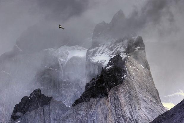 Birds in the Environment Category Winner: Condor in flight. © Ben Hall.
