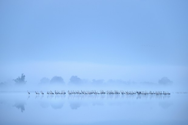 Birds in the Environment Category second place: The autumn migration of cranes. © Piotr Chara.