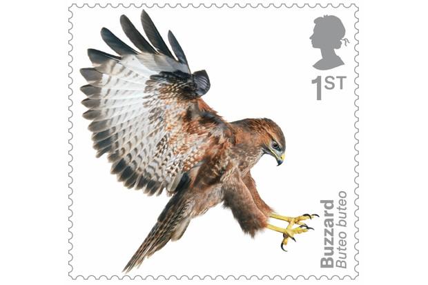 Bird of prey stamp collection - buzzard. © Tim Flach/Royal Mail.