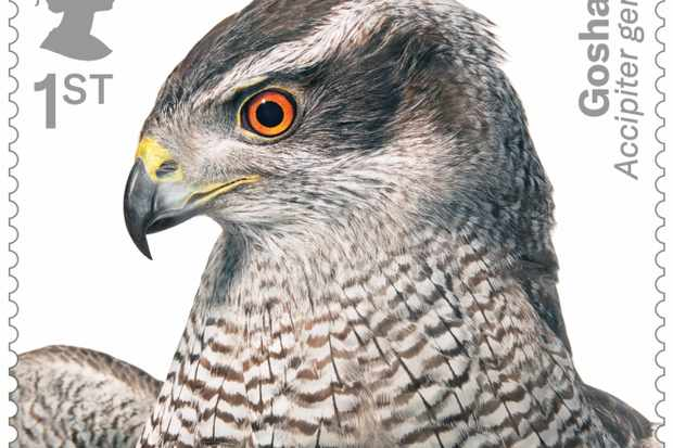 Bird of prey stamp collection - goshawk. © Tim Flach/Royal Mail.