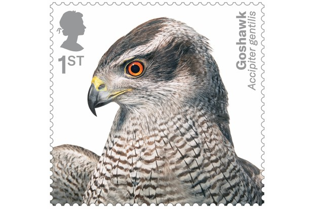 Birds of Prey Goshawk 400% stamp
