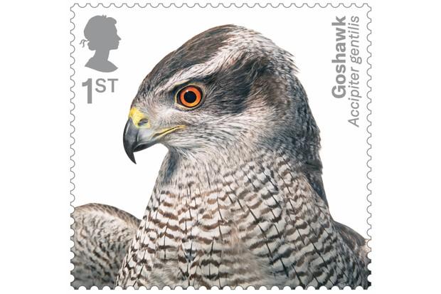 Birds of Prey Goshawk 400% stamp