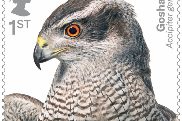 Birds Of Prey Stamps Released By Royal Mail Discover Wildlife