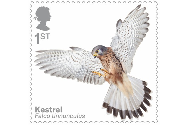 Bird of prey stamp collection - kestrel. © Tim Flach/Royal Mail.