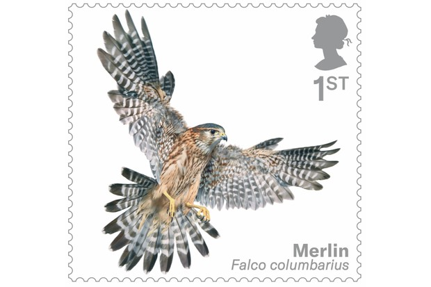 Bird of prey stamp collection - merlin. © Tim Flach/Royal Mail.