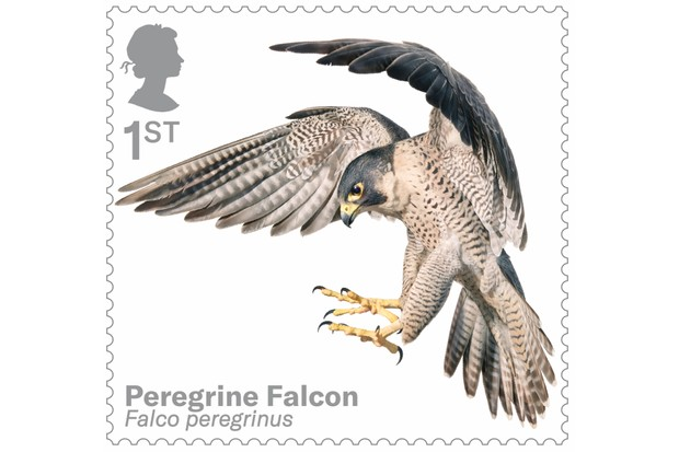Bird of prey stamp collection - peregrine falcon. © Tim Flach/Royal Mail.