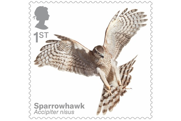 Bird of prey stamp collection - sparrowhawk. © Tim Flach/Royal Mail.