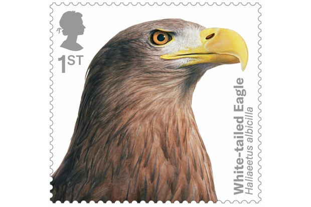 Bird of prey stamp collection - white-tailed eagle. © Tim Flach/Royal Mail.