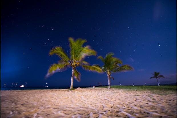 Botanical Category Winner: Coconut trees. © Joseph Sullivan.