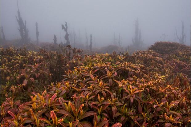 Botanical Category 2nd place: Miconia forest. © Rene Erazo.