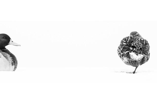 Creative Imagery Category second place: Him and her. © Francesco De Giuseppe.
