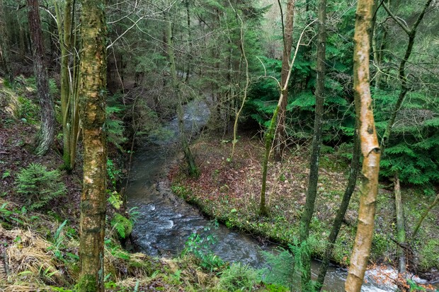 Cropton Forest. © Forestry England