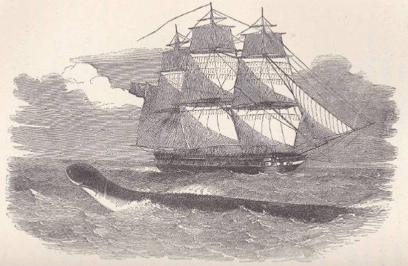 Image of a sea sea serpent seen in the South Atlantic in 1848