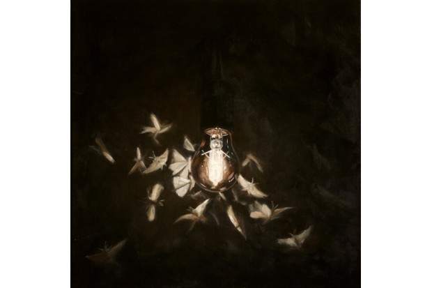 One of the finalists. Moths - 'Following the Light' by Alex Ashton