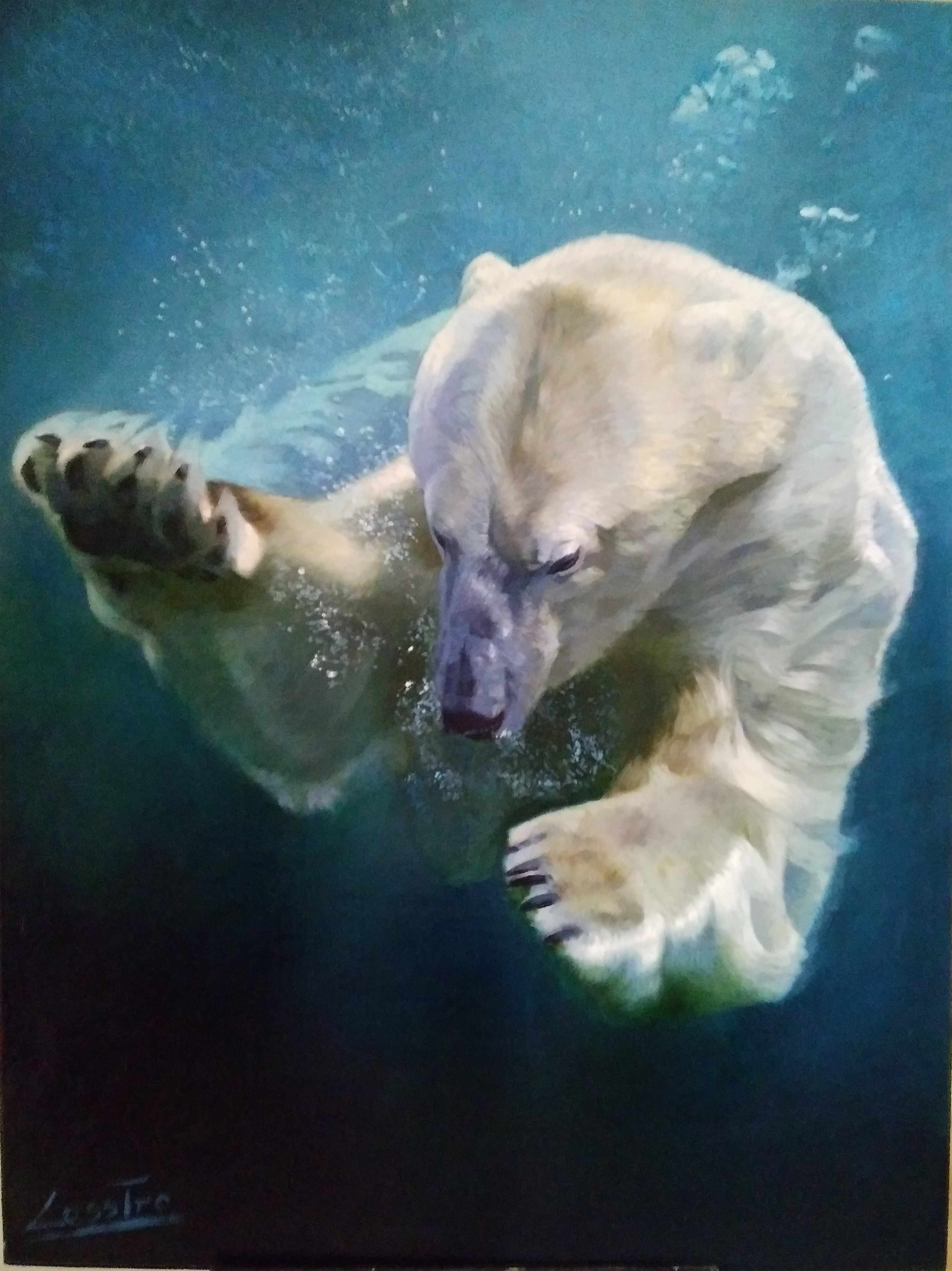 One of the finalists in the competition. Polar bear - Leszek Piotrowski