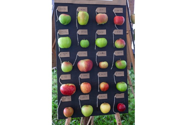 Traditional apple varieties on display at Cotehele, Cornwall. (c) Mel Peters/National Trust