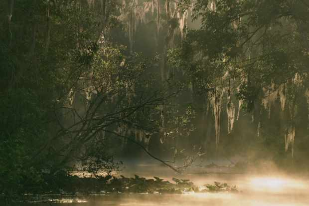 Florida has more than 20 rivers flowing through it, creating the enchanting swamps and wetlands the State is famous for.