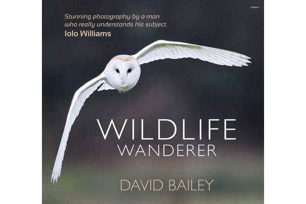 Wildlife wanderer. © David Bailey.