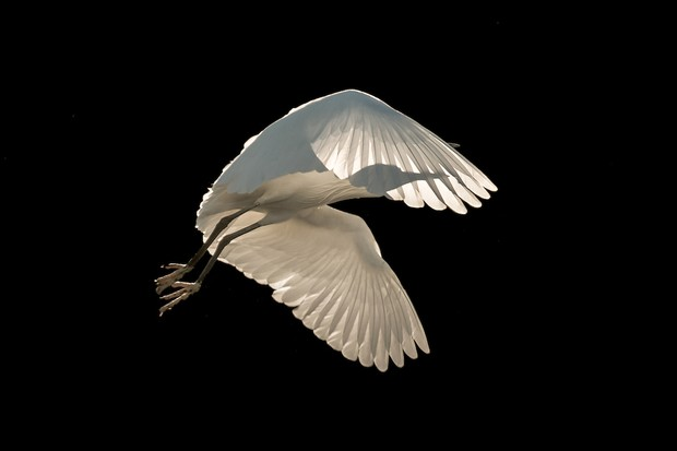 Birds in Flights Category Winner: Freedom. © Sienna Anderson/Bird Photographer of the Year.