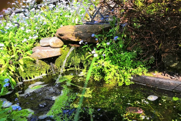 A wildlife pond with shade and vegetation for frogs. © ZSL