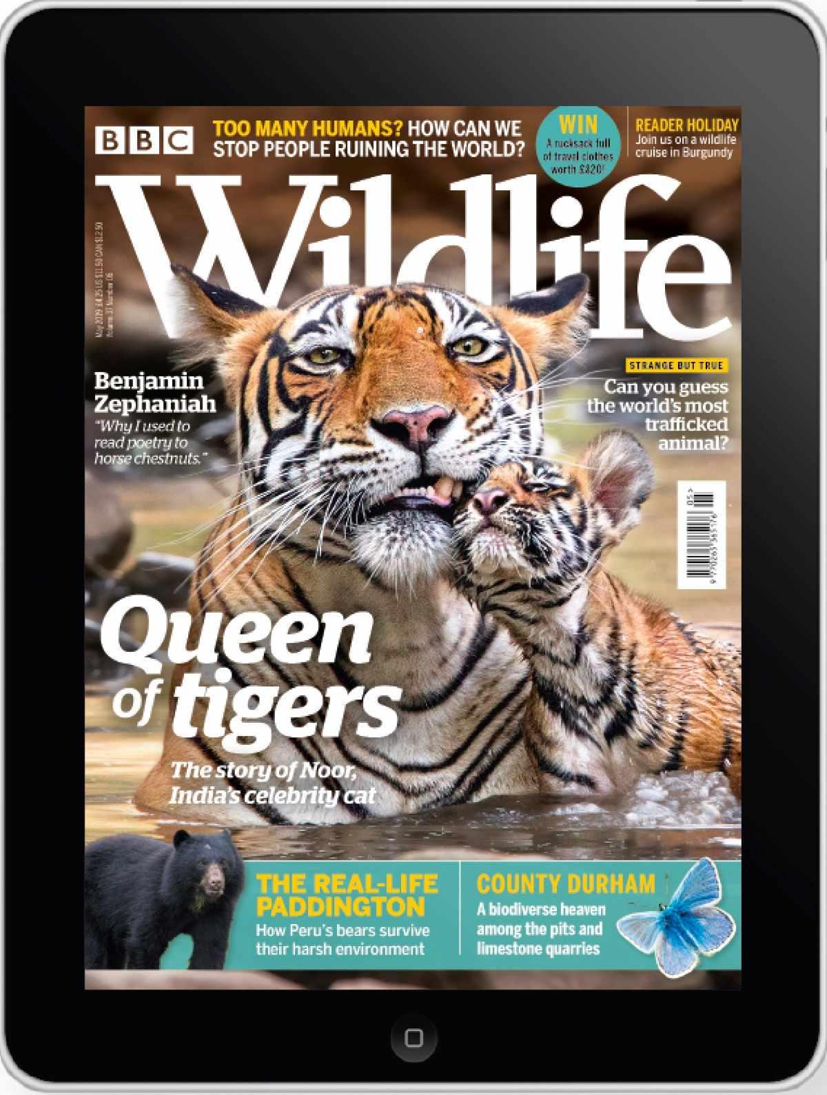 May cover_digital_web