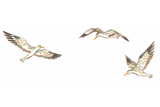 Gulls. © Helen Ahpornsiri