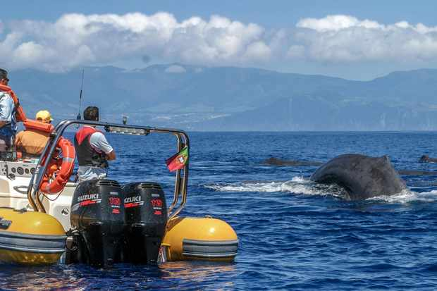Azores Whale Watching TERRA AZUL – Advertisement