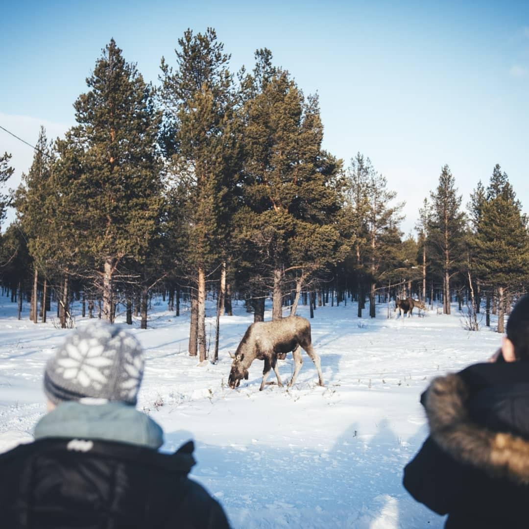 explore-kiruna - Alex Schijf