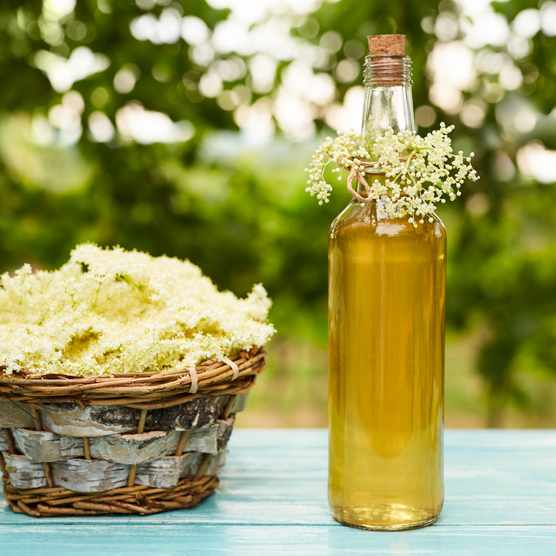 How to make elderflower gin. © Rostislav Sedlacek/Getty