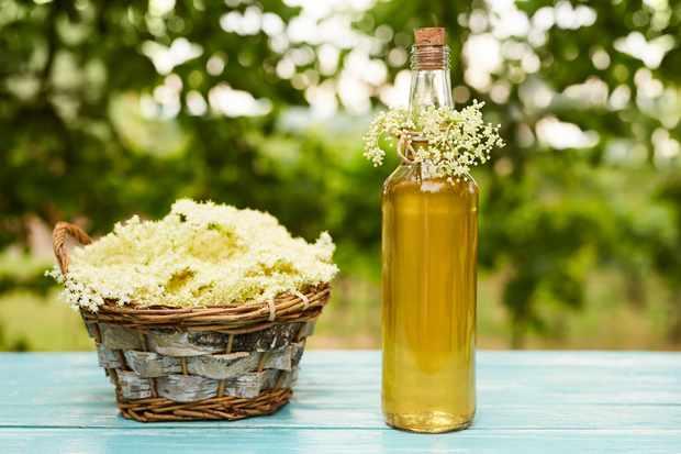 How to make elderflower gin. © Rostislav Sedlacek/Getty