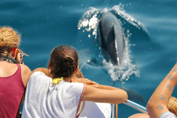 Dolphin Safari Gibraltar – first class – Advertisement