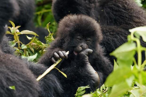 wild-rwanda-safaris - mateega brenda