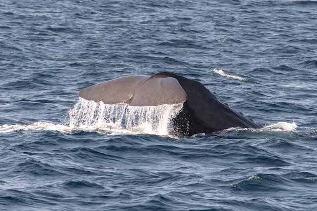 Arctic Whale Tours - Hannaleena Vaisanen
