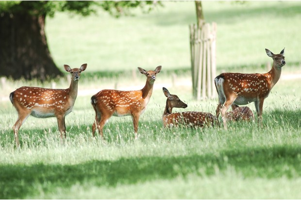 Guests can also walk through the deer park on the public footpath and look out for a range of deer species.