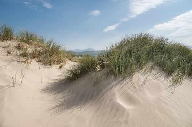 Sand dunes at Morfa Dyffryn, Wales, UK