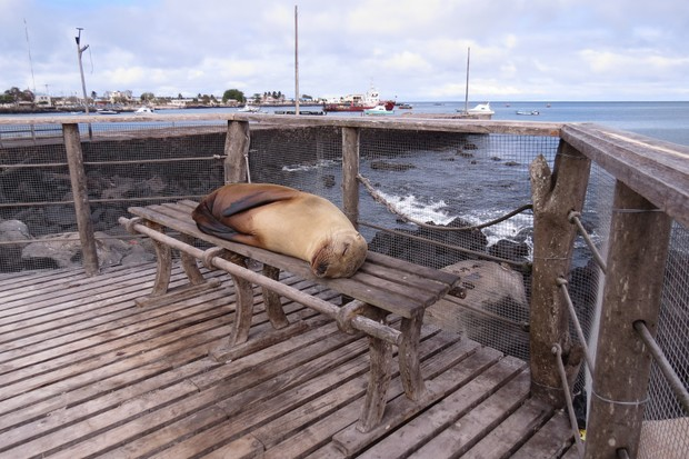 Joint runner up of the Urban category - 'Do not disturb!'. © Olivia Suzuki/Galápagos Conservation Trust