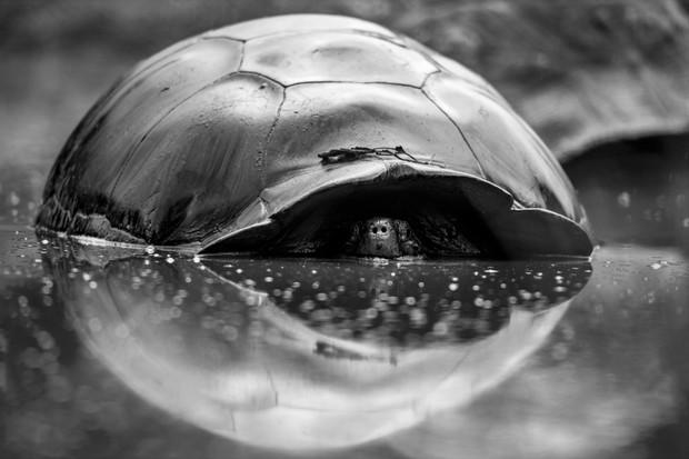 Overall winner - 'Reflections' by © Joe Sullivan/Galápagos Conservation Trust