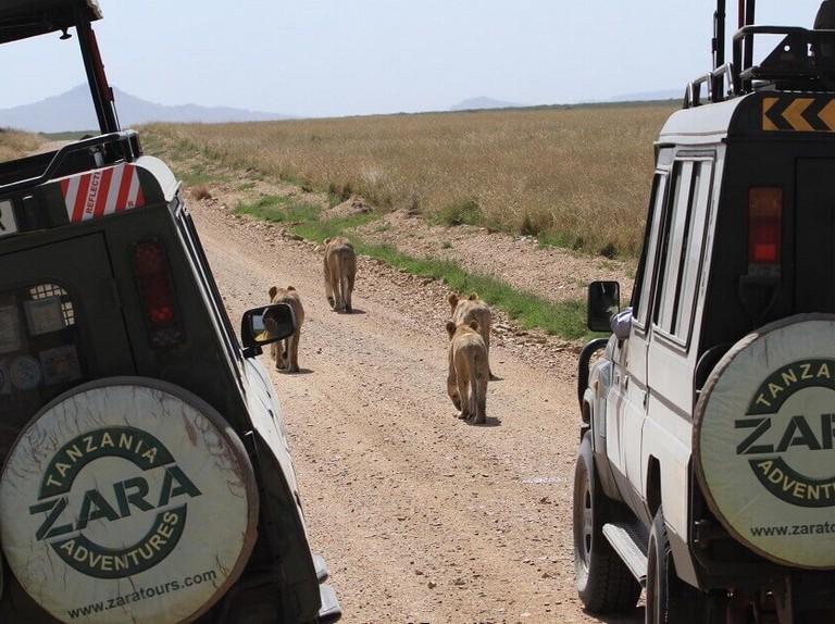 Zara Tours/Tanzania Adventures/Zara International Travel agency Ltd - Advertisement