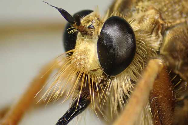 Insects & Invertebrates - Discover Wildlife