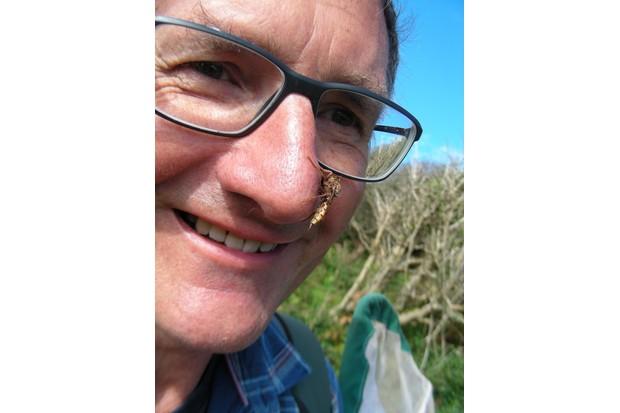 Dipterists Forum Chairman Rob Wolton 'hosting' an Asilus crabroniformis