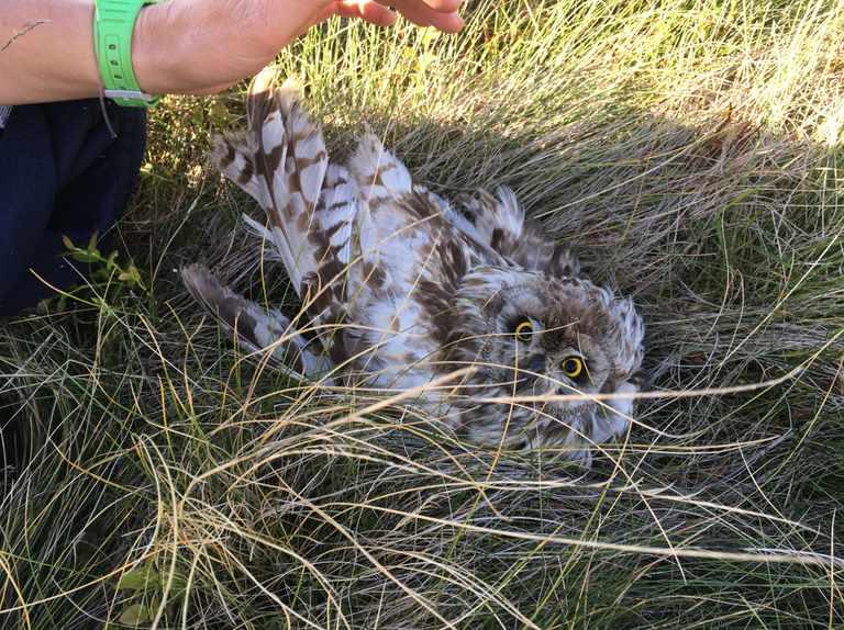 Birdcrime 2018 report reveals persecution of birds of prey